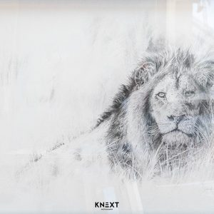 de LANGE Lion in Recline Graphite on Paper 700x900mm 2019